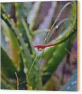 Raindrop On Aloe Vera Leaf Wood Print