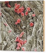 Red Blood Cells, Sem Wood Print