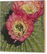 Red Cactus Flowers Wood Print