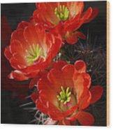 Red Hedgehog  Wood Print