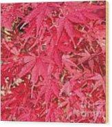 Red Leaves 1 Wood Print