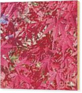 Red Leaves 2 Wood Print