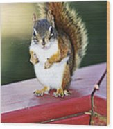Red Squirrel On Railing Wood Print