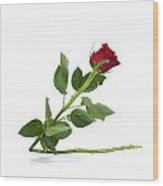 Red Tulip Wood Print by Bernard Jaubert