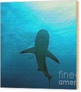 Reef Shark Wood Print