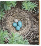 Robins Nest And Cowbird Egg Wood Print