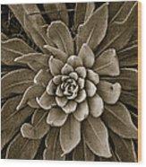 Round Wood Print