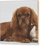 Ruby Cavalier King Charles Spaniel Pup Wood Print