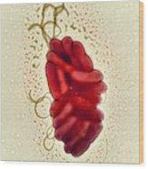 S. Maltophilia Bacteria, Tem Wood Print