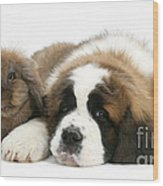 Saint Bernard Puppy With Rabbit Wood Print