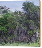 Santa Susana Mountains Wood Print