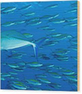 School Of Wide-band Fusilier Fish Wood Print