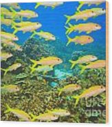School Of Yellowfin Goatfish Wood Print