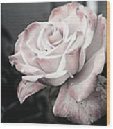 Secret Garden Rose Wood Print