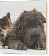 Shar Pei Puppy And Tortoiseshell Kitten Wood Print