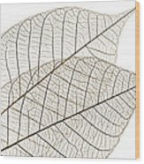 Skeleton Leaves Wood Print by Elena Elisseeva