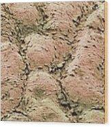 Skin Surface, Sem Wood Print