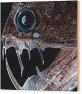 Sloanes Viperfish Wood Print