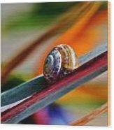 Snail On Stelitzia Reginae Wood Print