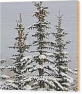 Snow Covered Evergreen Trees Calgary Wood Print