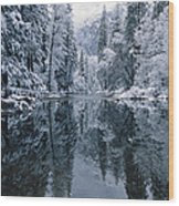 Snow-covered Trees Reflected Wood Print