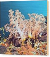 Soft Coral On A Reef Wood Print