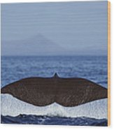 Sperm Whale Tail New Zealand Wood Print