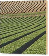 Spinach Crop Wood Print