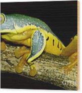 Splendid Leaf Frog Wood Print