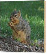 Squirrel Eating Wood Print