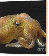 Stubby Squid Wood Print