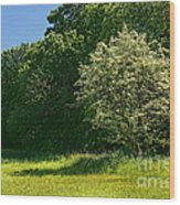 Sunny Meadow Wood Print