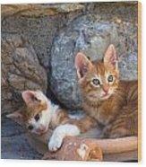 Sweet Cats Wood Print