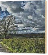 Sycamore Tree Wood Print