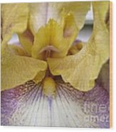 Tall Bearded Iris Named Butterfingers Wood Print