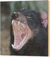 Tasmanian Devil Wood Print by Tony Camacho