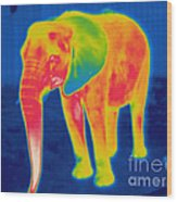 Thermogram Of An Elephant Wood Print
