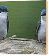 Tree Swallows Wood Print