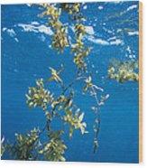 Tropical Seaweed Wood Print