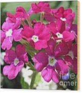 Verbena From The Ideal Florist Mix Wood Print