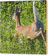 White-tailed Deer Wood Print