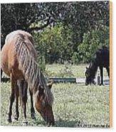 Wild Spanish Mustang Foal Wood Print
