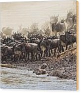 Wildebeest Before The Crossing Wood Print