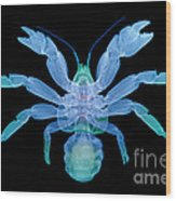 X-ray Of Coconut Crab Wood Print