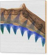 X-ray Of Shark Jaws Wood Print