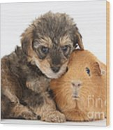 Yorkipoo Pup With Guinea Pig Wood Print