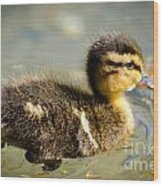 Young Duck Wood Print