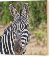 Zebras In The Masai Mara Wood Print