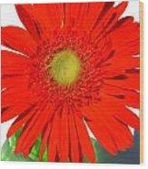 2003a1-2 Wood Print