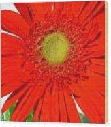 2003a1-3 Wood Print